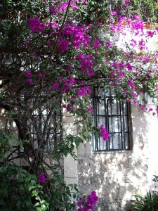 Home and Flowers, Taxco, Mexico