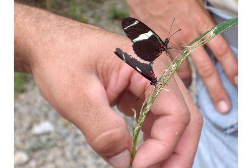 Butterflies. Arenal, Costa Rica