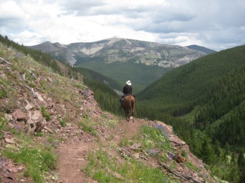 A horse in Montana