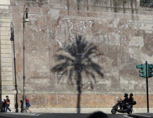 Ghost tree. Rome, Italy.