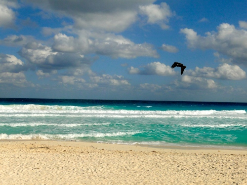 Bird over Beach. Cancun, Mexico.