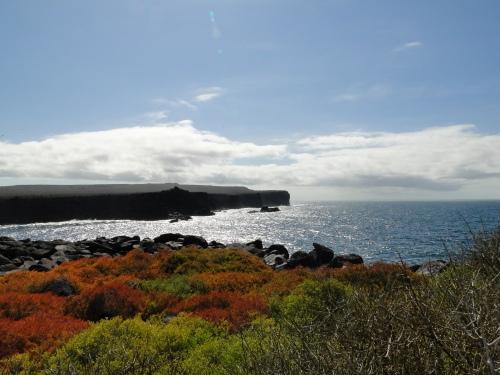 Galapagos coast. Ecuador.